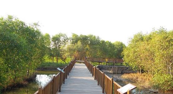 wisata-mangrove hutan mangrove wonorejo